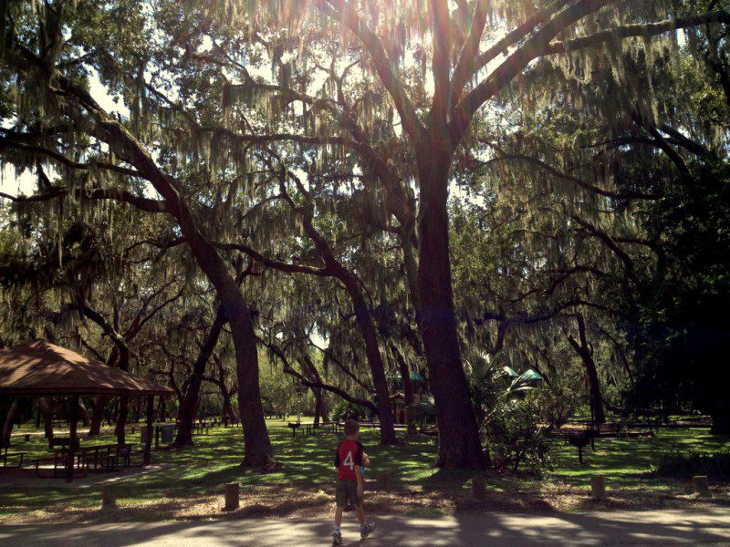 Towering oaks covered in Spanish moss create a shady canopy.
