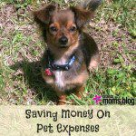 7 Ways To Save Money On Pet Expenses