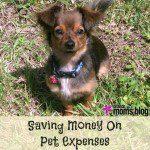 7 Ways To Save Money On Pet Expenses