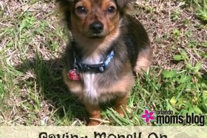 Saving-money-on-pet-expenses2