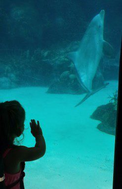Dophins!!!
