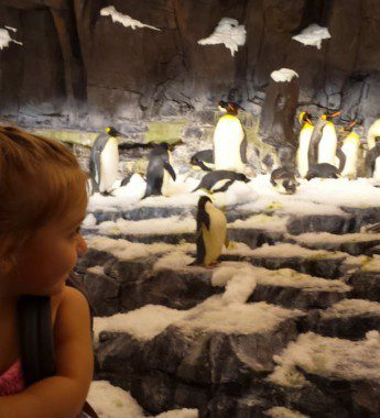 You are SO close to the penguins. It is amazing.