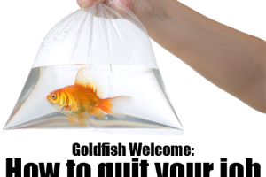 Goldfish-Welcome