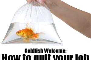 Goldfish-Welcome