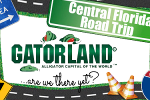 Road-Trip-Gatorland-feature