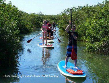 cfl pb family mangroves