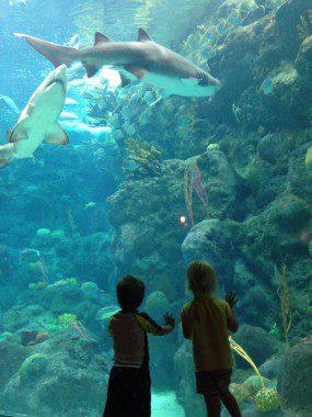 Little fish, big world.