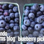Orlando Moms Blog Blueberry Picking Guide