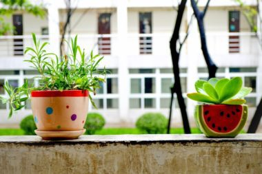 bonsai-781882_1280
