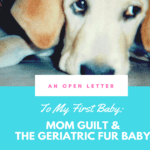 An Open Letter to My First Baby: Mom Guilt and The Geriatric Fur Baby