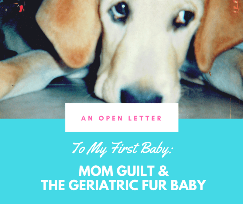 Mom Guilt and My Geriatric Fur Baby