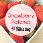 Orlando Moms Blog Guide to Strawberry Patches