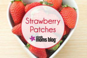 Strawberry-Patches2