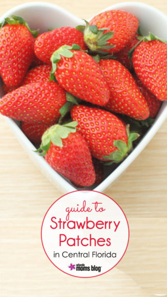 Strawberry-Patches3