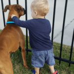 Bringing A Foster Dog Home To The Family. Is It The Right Decision?