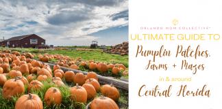 Pumpkin Patches, Farms + Mazes