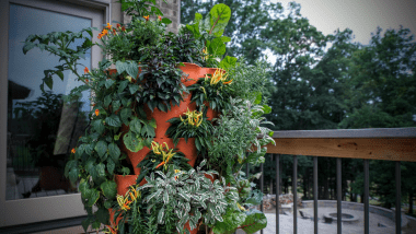 transform your outdoor space with plants!