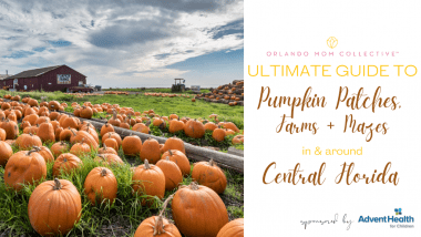 pumpkin patches, farms and mazes